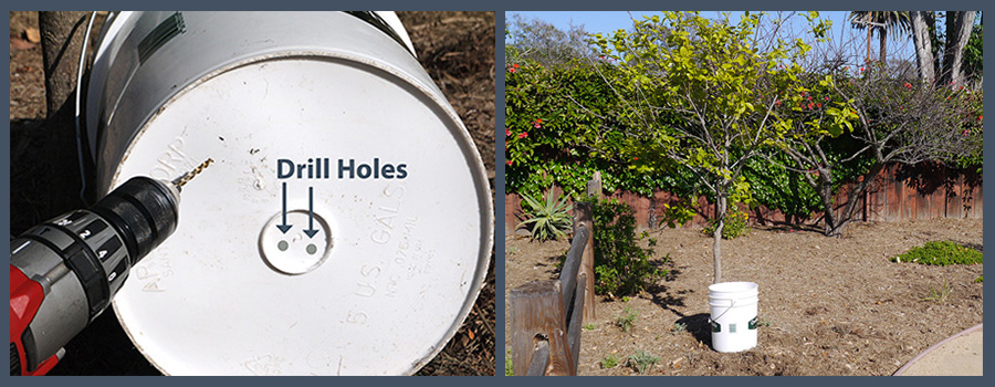 Drip Irrigation Bucket photos of how to drill holes in the bottom and place next to a tree.